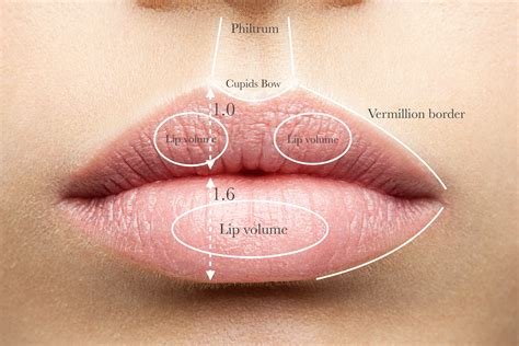 anatomy lips picture 14