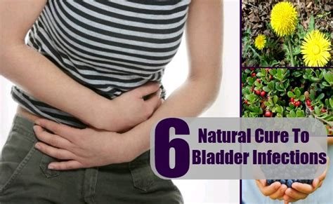 how to treat bladder infection in dachsund picture 21