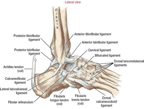 lisfranc joint picture 9