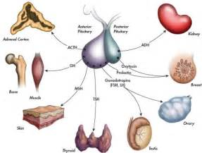endocrinology of aging female body picture 17