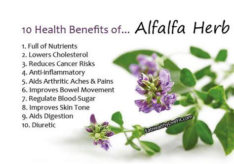 benefits of alfalfa picture 11