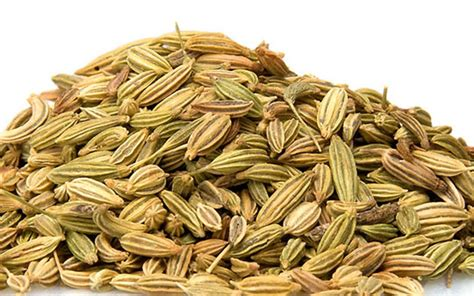 what is fennel picture 5