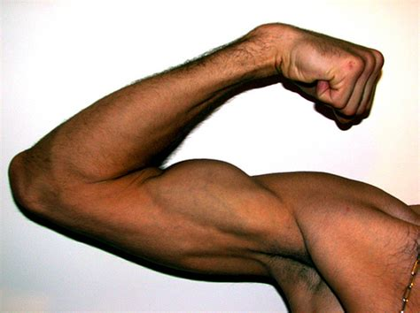 what is the definition of muscle strength picture 5