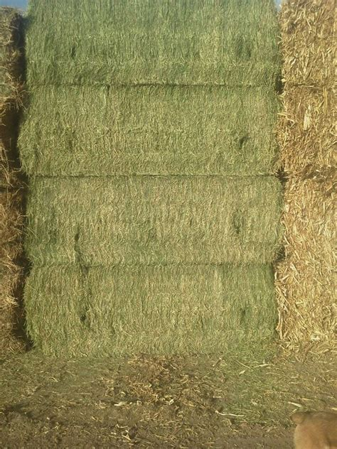 alfalfa hay for sale picture 7