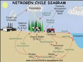 bacterial role in nitrogen cycle picture 9