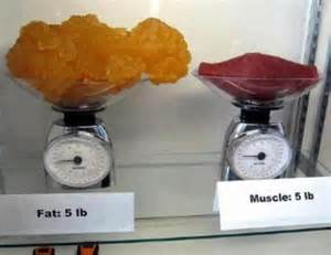 muscle and fat picture 2