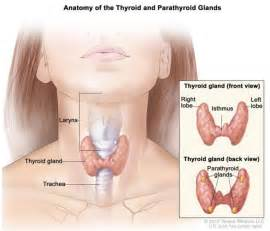 benign tumor in parathyroid gland picture 19