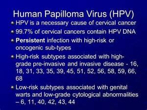 human papillomavirus type 58 picture 5