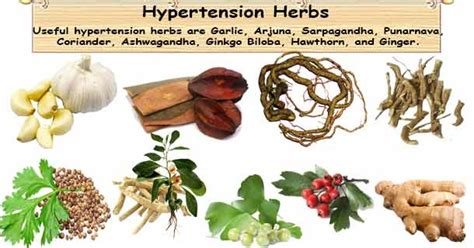 wiccan herbs for high blood pressure picture 13