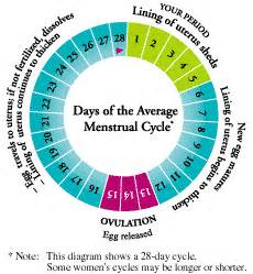 reviews of menstrual reg picture 9