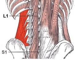 lower back muscle pain picture 3