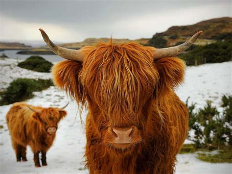 how long do you have to take bovine picture 3