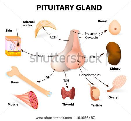 postpartum thyroid treatment picture 19