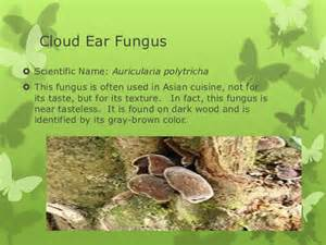 scientific names for fungi picture 9