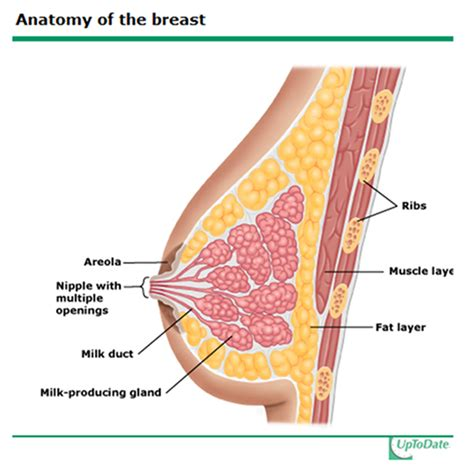 womens aging breasts picture 6