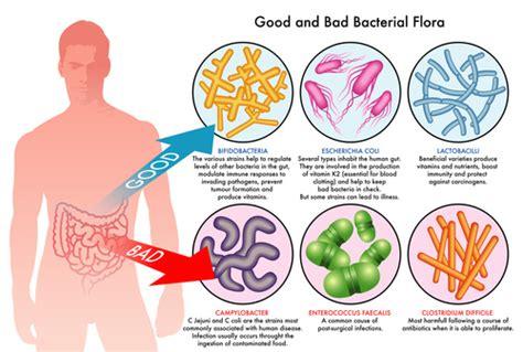 probitics for a healthy colon picture 3