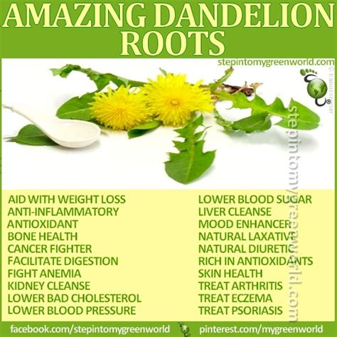 dandelion root and weight gain picture 1