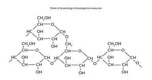 chemical structure of starch picture 7