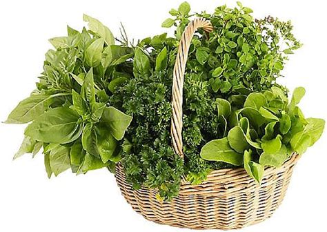 detrusor muscle toning herbs picture 13