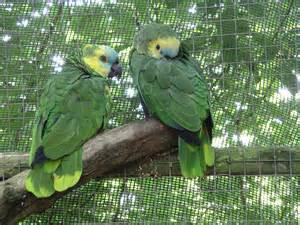 amazon picture 14