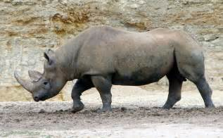 where to buy rhino 7 picture 3