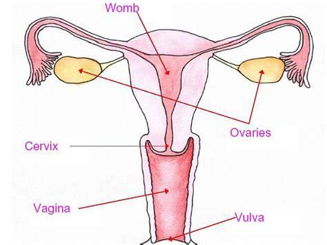 vagina picture 6