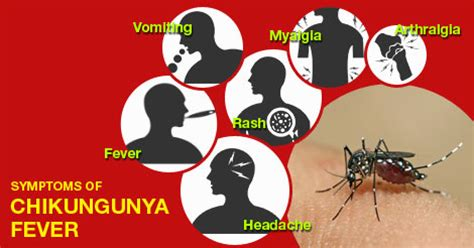 chikungunya virus symptoms and signs picture 6