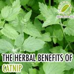 advantage of herbal solutions picture 15