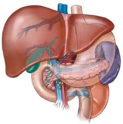 enlarged fatty liver picture 1