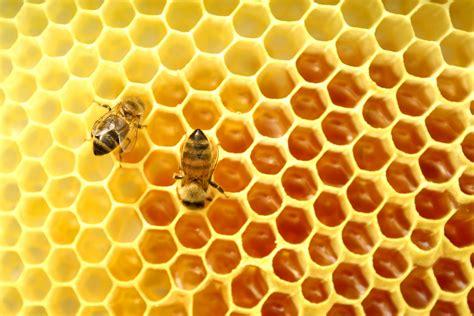 hive modular picture 6