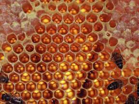 Honey comb bee hive picture 2