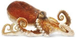 do squid have h picture 19