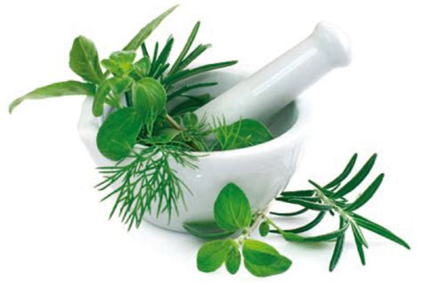 gout herbal picture 10