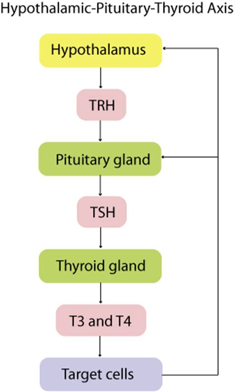antone try t4 t3 protocol with hypothyroidism picture 5