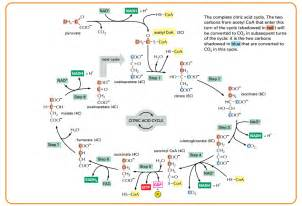 alpha lipoic acid picture 7