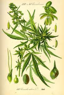 weed botanical products picture 11