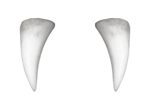 fang teeth picture 1