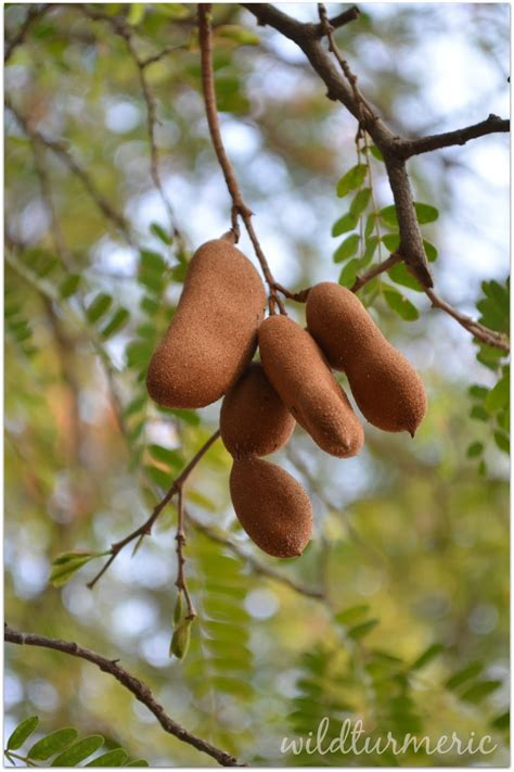 tamarind weight loss picture 11