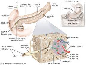digestive medicine ociates picture 19
