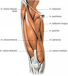 testosterone injection sites shoulder picture 7