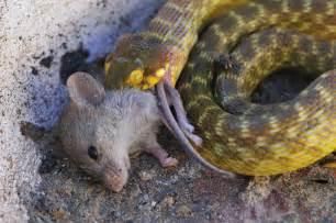 anaconda diet picture 19