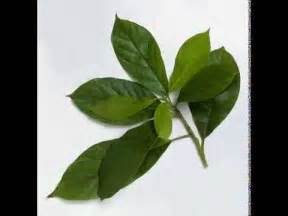 abukado in philippines picture 18