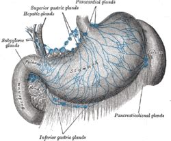 gall bladder and celiac picture 1