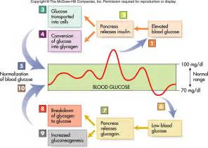 diet regulating hypoglycemia picture 13