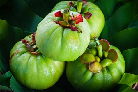garcinia plus side effects picture 9