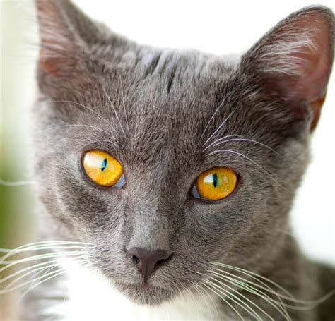 skin conditions in cats picture 7
