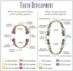 baby teeth growth picture 1