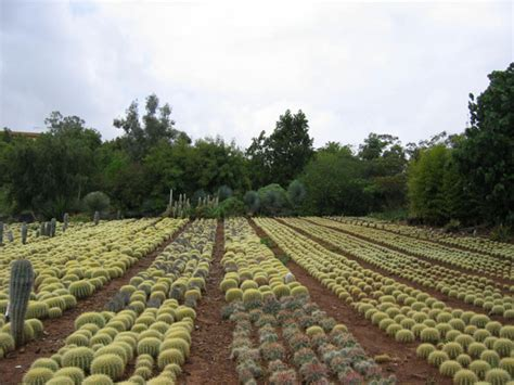 hoodia pills to buy picture 13