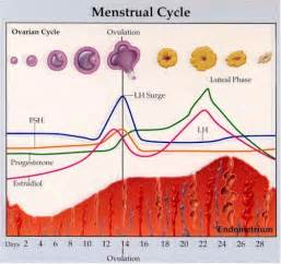 gain weight before menstratioin picture 3