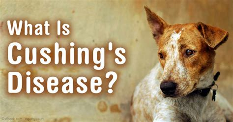cushings disease in the aging picture 3